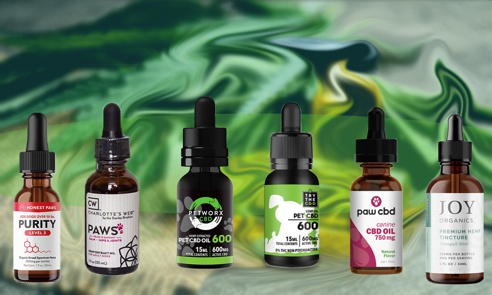 Using CBD For Dogs: Why it is Important to Consider This Alternative Treatment Option